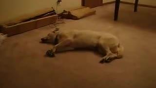 Sleepy Olympic Dog