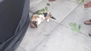 Ginger Hyperactive cat Playing with Tree branch