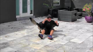 Training your Dog to Guard