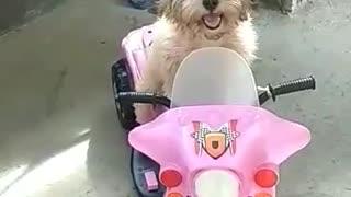 Cute Puppy motorcycle ride