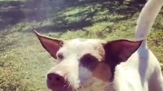 Slow motion water hose dog