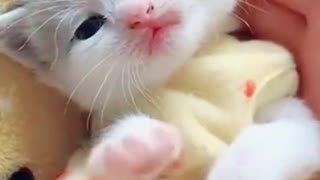 Most Adorable little kitty ever
