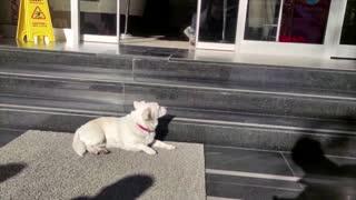 Dog waits a week for owner outside Turkish hospital