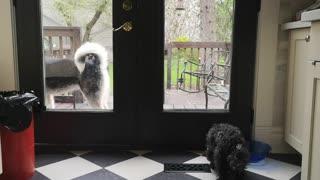 Husky opens the door