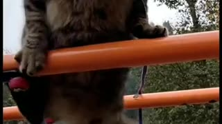 supportive cat treats like soldier