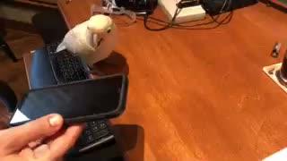 Bob uses the phone