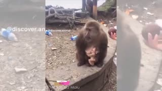 Baby animals cute animal