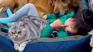Clingy pets