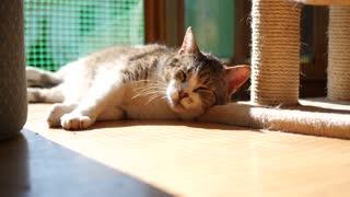 Cat British FUNNy 4K Video