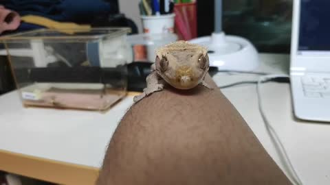 My friend's lizard!!!!!!!!!!!!