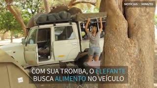 Elefante invade acampamento a procura de comida