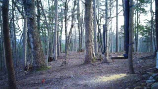 The Woods - 03/21/2021