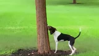 Dog eats tree