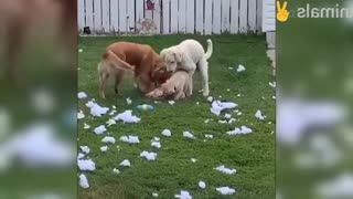 Cute dogs try don't laugh