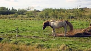 horse rolling animal farm equine