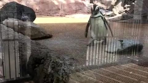 There's a penguin on top @Kyoto-Aquarium