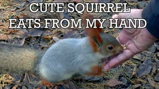 Cute Squirrel Eats From My Hand
