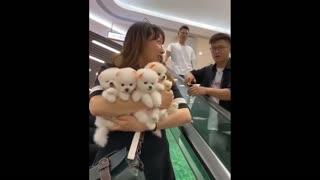 💗😍 Funny and Cute Pomeranian #11 😍 Perritos bebes lindos 🐱💗