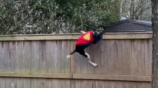 Super Dog Defends House Against Troublesome Squirrel