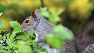 Amazing animals clip