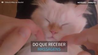 Gato relaxa profundamente ao receber massagem