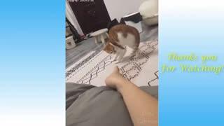 Hilarious Animal Video!!