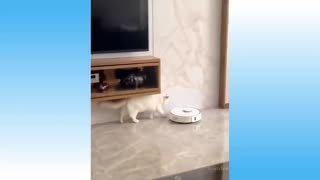 Many More Funny Cats Just Being Themselves