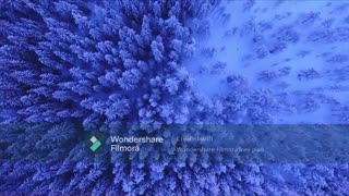 Dense Forest Covered In Blanket Of Snow