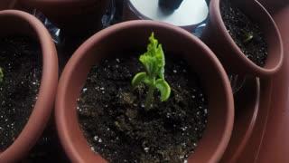 Plant Time-lapse Video