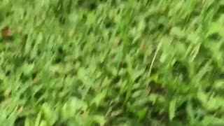 Shirtless guy rope hammock swing falls out hits grass floor laugh