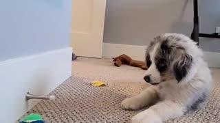 Puppy Plays with Doorstop