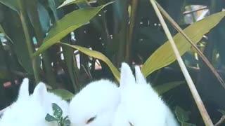 Baby bunnies enjoy their snack time