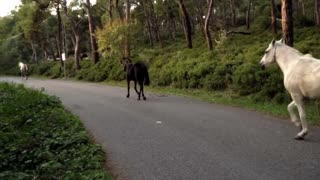 Black and white horses gallop quietly on a motor road