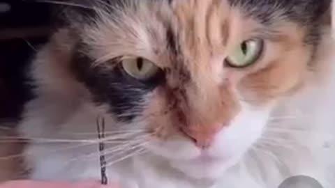 لما تكون اهبل بس القط مستحملك عشان الاكل بس😂
