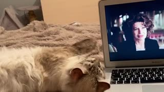 cat wants attention   кот хочет внимания
