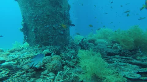 Coral reefs and water plants in the Red Sea, Eilat Israel 4