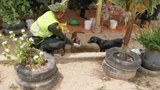 Perros en albergues Bucaramanga