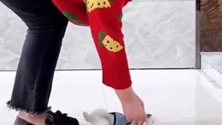 cute little puppy 1