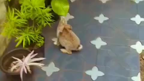 Bunny eating leaves from my garden, trying to hide when I start filming🎥🎬