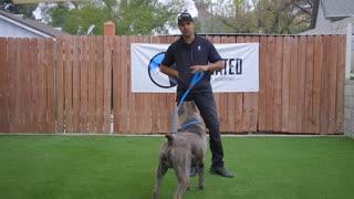 DOG TRAINING FUNDAMENTALS first lesson