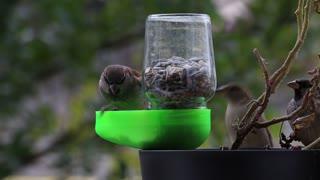 Bird feeder made of glass
