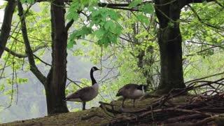 Nature with Birds beautiful life