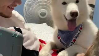 Dog Hears Dad's Voice on Video Call
