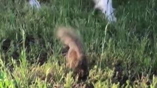 Furry Friends Having Fun in the Yard