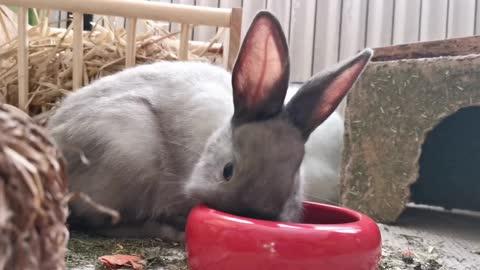 Cute Rabbits Funny