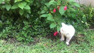 A White Kitten Cat Playing With a Flowering Plant