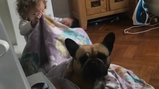 Little Girl Preciously Plays With French Bulldog