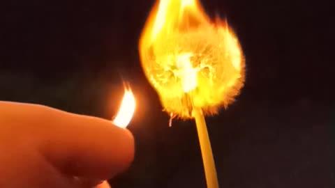 Dandelion burning slowmo