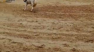 Elegant Horse Riding Competition