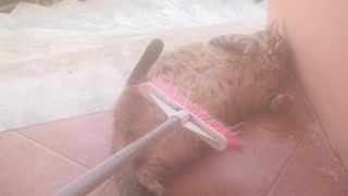 Cat Gets Groomed with a Broom